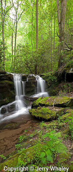 Waterfalls, Spring, Great Smoky Mountains NP, TN