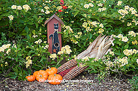 63821-22404 Birdhouse, pumpkins, and ornamental corn in garden with yellow lantana (Lantana camara) Marion Co., IL