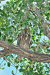 Owl in Bighorn River  Fort Smith, Montana