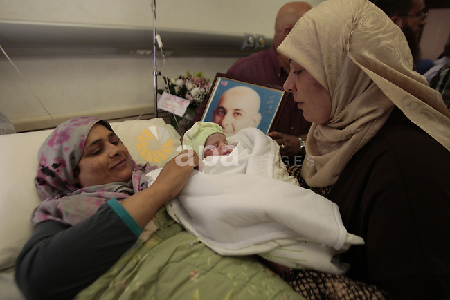 The wife of Palestinian prisoner in Israeli jails Ra'fat al-Qarawi, lays on a hospital bed after gave birth to a baby boy in the West Bank City of Nablus, Sept 06, 2013.  al-Qarawi smuggled his sperm sample from the jail and used in a succes artificial insemination operation. Photo by Nedal Eshtayah