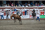 Rider falling off of a bucking bronco at the Calgary Stampede