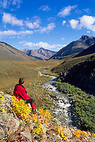 Hiker enjoys view of mountain stream flowing out of the Arctic National Wildlife refuge, Atigun Canyon, Brooks Range, Alaska