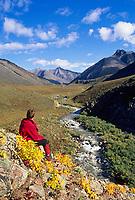 Hiker enjoys view of mountain stream flowing out of the Arctic National Wildlife refuge, Atigun Canyon, Brooks range, Alaska