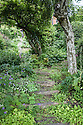 Sleeper-and-stone steps, hillside garden, Fairlight End, Pett, East Sussex, late June.