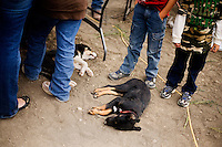 Dogs lay at the feet of people watching the mechanical bull rodeo at the Mechanical Bull-A-Rama at the Whoa Arena in Valier, Montana, USA.  The event, organized by Janelle Nelson, was a benefit for local youth rodeo participants and the local food bank.