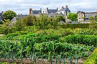 France, Sarthe (72), Le Lude, château et jardins du Lude, le potager, poireaux, bettes, haricots nains,  aubergines, zinnias et serre adossée au fond
