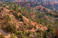 730750169 early morning lights up the hoodoos as tourists on horseback begin the descent into the canyon in this view from sunrise point in bryce canyon national park utah united states