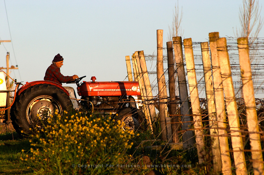 A vineyard worker on a Massey Ferguson tractor treating the vines. Bodega Carlos Pizzorno Winery, Canelon Chico, Canelones, Uruguay, South America