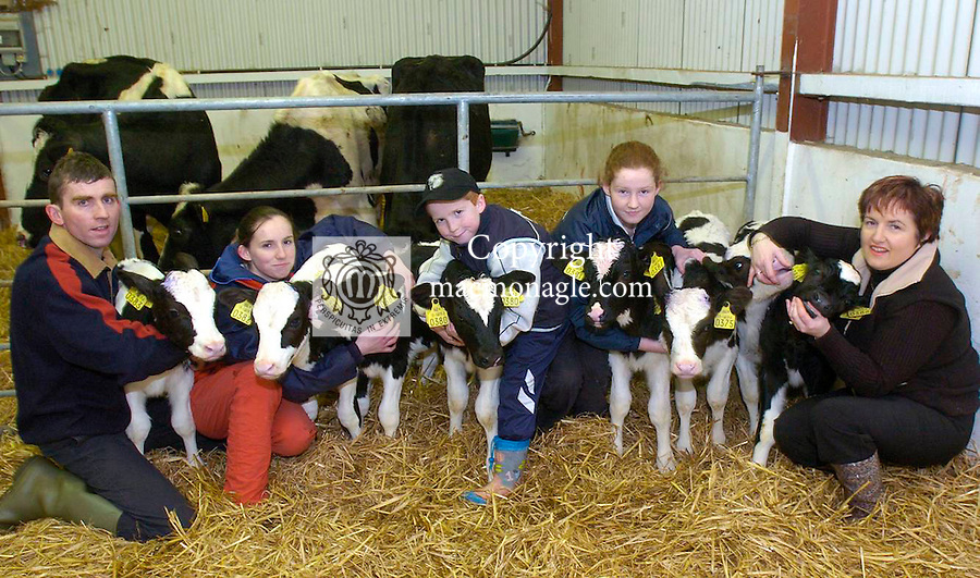 Four sets of twin calves, all related,  were born on the farm of Pat O'Connor, Ballyhar, Killarney last weekend. Our picture shows Patrick and Noreen with their children Padraig, (8), Sandra (12) ans Karen, (15) with the healthy calves. Two sets were born from twin mothers and one set from the mother of the elder twins..Picture by Don MacMonagle