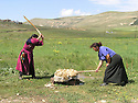 Armenia 2007  <br /> Yezidi women beating wool during the summer season   <br /> Armenie 2007  <br /> Femmes yezidi battant la laine dans un village en ete.