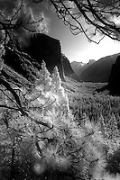 Digital infrared images from Yosemite National Park early morning and late afternoon in April. <br /> <br /> All images are high resolution or 4288x2848 pixels and taken on Nikon D2X camera using infrared filter.