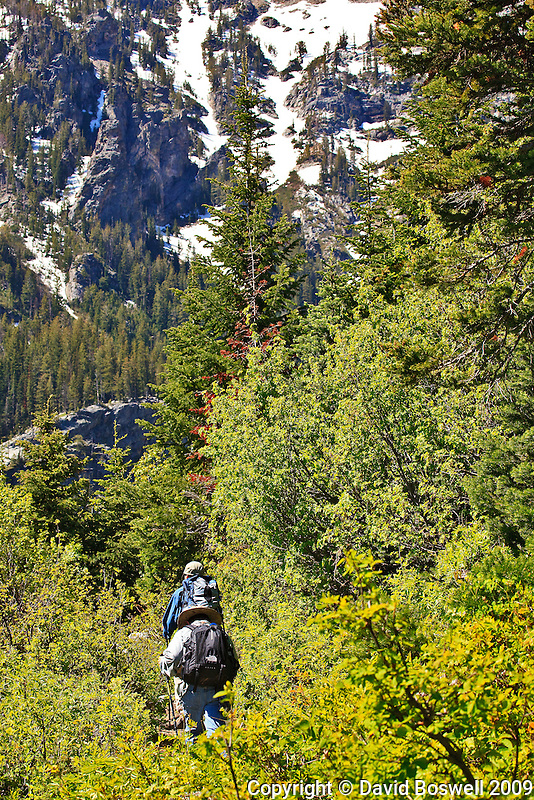 My son Ethan and nephew Kyler hiking through the thick foliage in Cascade Canyon, Grand teton National Park.