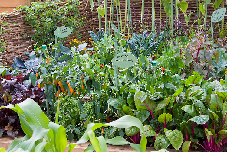 Hot peppers growing with Danger Red Hot Food sign label Capsicum in garden Chili pepper vegetable, cute, mixture of crops, chard, corn, lettuce, kale, red cabbage, whicker trellis, pole beans, climbing, signet marigolds Tagetes flowers, herbs basil, wide variety in vegetable garden