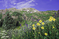Mountains and wildflowers in alpine meadow,Tall Larkspur,Sunflowers,Loveroot,Ouray, San Juan Mountains, Rocky Mountains, Colorado, USA