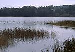 waterfowl at Bolinas Lagoon