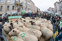 2018/03/13 Berlin | Landwirtschaft | Protest | Weidetierprämie