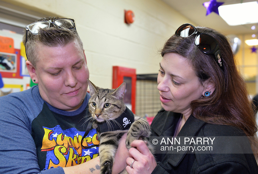 Wantagh, New York, USA. February 7, 2016. Tiger the tabby cat, who was one of the team players in the Hallmark Channel Kitten Bowl III, is with his new family - CHARLIE BROWN, who's holding the feline star wearing a harness decorated with skull and crossbones, and MELANIE BENEDETTO, of Massapequa - at Last Hope Animal Rescue's Open House, where the adoption center's guests watch the game on TV and cheer on their team, the Last Hope Lions. Over 100 adoptable kittens from Last Hope Inc and North Shore Animal League America participated in the taped games, and the Home and Family Felines won the 2016 championship, which first aired the day of Super Bowl 50.