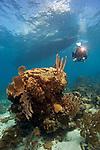 Allison Estape, Roatan, SCUBA diver, photographer, reef scene