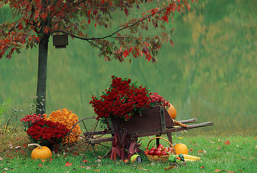 Wheelbarrow under tree in fall