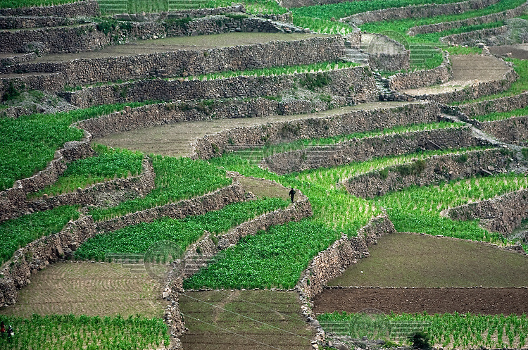 Terraced agricultural land in the mountains west of Sana'a.