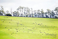 Image Ref: YV158<br />