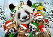 Howard, SELFIES, paintings+++++,GBHR885C,#Selfies#, Christmas,#xa# ,panda,pandas