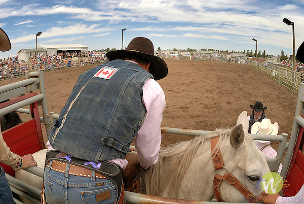 Saddle Bronc Rider readying horse to ride in Beef and Barley Days Rodeo.