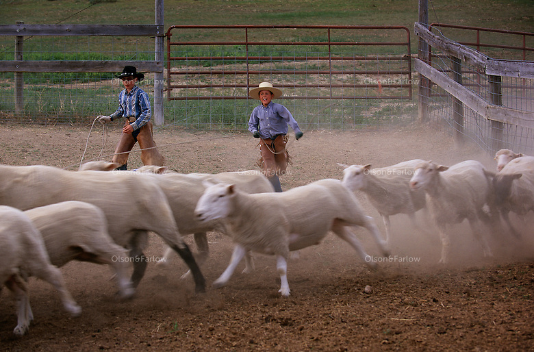 Drew Kuntz and Ty Tousignan practice roping sheep as they stampede in a coral on the Fritz ranch. The boys watched as ranchers roped and branded cattle during the day, then they decided to practice on some of the 240 sheep the Fritzes run on their North Dakota ranch.