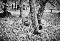 Farm House Trees, Carl Sandburg Home, NC, Flat Rock, Dec, garden