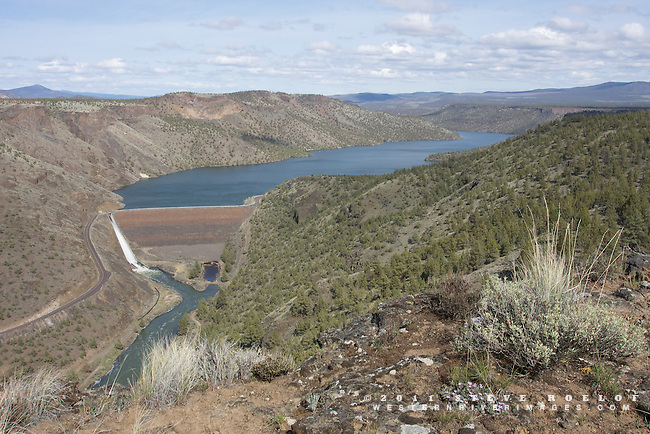 Phlox, bunchgrass, and sage above the Prineville Reservoir, Oregon.