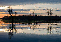 Sunrsie light creates silhouettes of trees and their reflections in a wetland along the Portage River, Phyllis Haehnle Memorial Sanctuary, Jackson County, Michigan