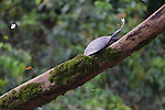 Yellow-spotted River Turtle With Butterfly, Tiputini