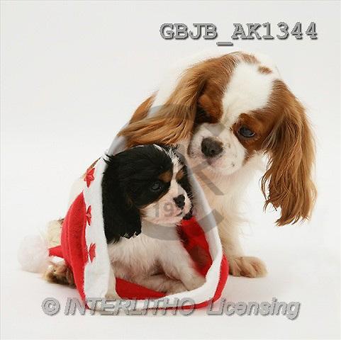 Kim, CHRISTMAS ANIMALS, photos(GBJBAK1344,#XA#) stickers