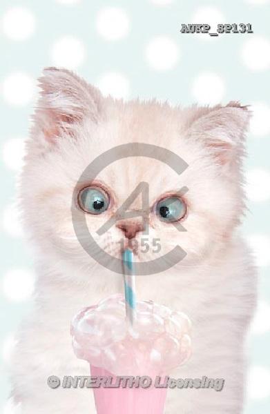 Samantha, ANIMALS, REALISTISCHE TIERE, ANIMALES REALISTICOS, funny, photos+++++,AUKPSP131,#a#