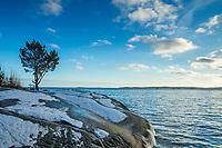 Träd på klippa med snö  på vintern i Stockholms skärgård vid  havet