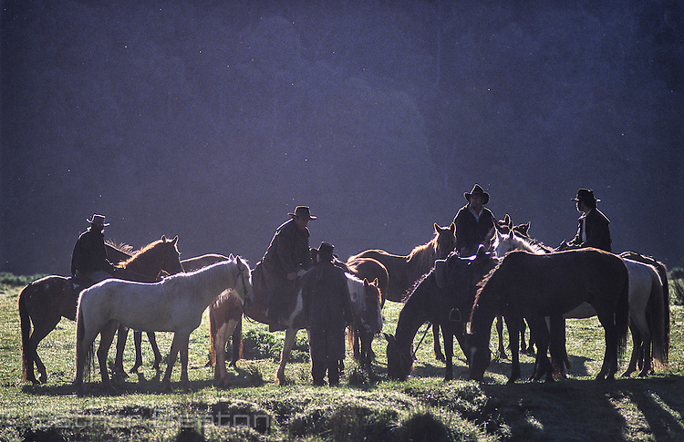 Stockman and horses in mountain meadow, early morning. Mt Buller, Snowy Mountains, Victoria