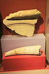 Ggantija temples visitor centre display museum, Gozo, Malta cattle horn stone jar shard display