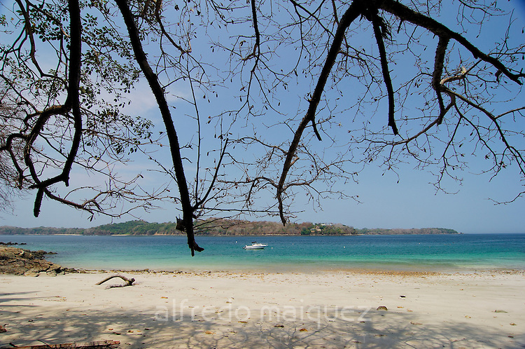 Branches of leafless tree at the beach in Contadora island. Las Perlas Archipelago, Panama province, Panama, Central America.