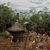"""a view of the village ofDokoto  near Konso, in Southern Ethiopia on August 31, 2010...Trachoma (Ancient Greek: """"rough eye"""") is an infectious eye disease, and the leading cause of the world's infectious blindness. Globally, 84 million people suffer from active infection and nearly 8 million people are visually impaired as a result of this disease. Globally this disease results in considerable disability..Ethiopia carries the largest burden of trachoma infection--30%--in Africa.   .1.3 million Ethiopians (15 years and older) have trichiasis, the advanced stage of trachoma, and need immediate surgery. .Of children aged 1-9 years, over 9 million--40%--have an active trachoma infection;  in some Ethiopian districts, more than 80% of children have active trachoma. .( Source: WHO 2008 ).."""