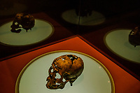 SAO RAIMUNDO NONATO, BRAZIL - FEBRUARY 01, 2014: A human skull, The Zuzu skull,  estimated to be 9,920 years old is displayed at the Funda&ccedil;&atilde;o Museu do Homem Americano displaying artefacts from the Serra de Capivara National Park on February 01, 2014 in Sao Raimundo Nonato, Piaui province, in Northern Eastern Brazil.  <br /> <br /> <br /> Daniel Berehulak for The New York Times
