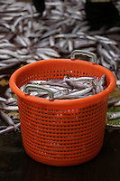 Basket of blue whiting Micromesistius poutassou or Gadus poutassou on trawler deck