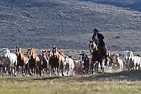 run down Cowboys working and playing. Cowboy Cowboy Photo Cowboy, Cowboy and Cowgirl photographs of western ranches working with horses and cattle by western cowboy photographer Jess Lee. Photographing ranches big and small in Wyoming,Montana,Idaho,Oregon,Colorado,Nevada,Arizona,Utah,New Mexico. Cowboys and cowgirls living the western lifestyle.