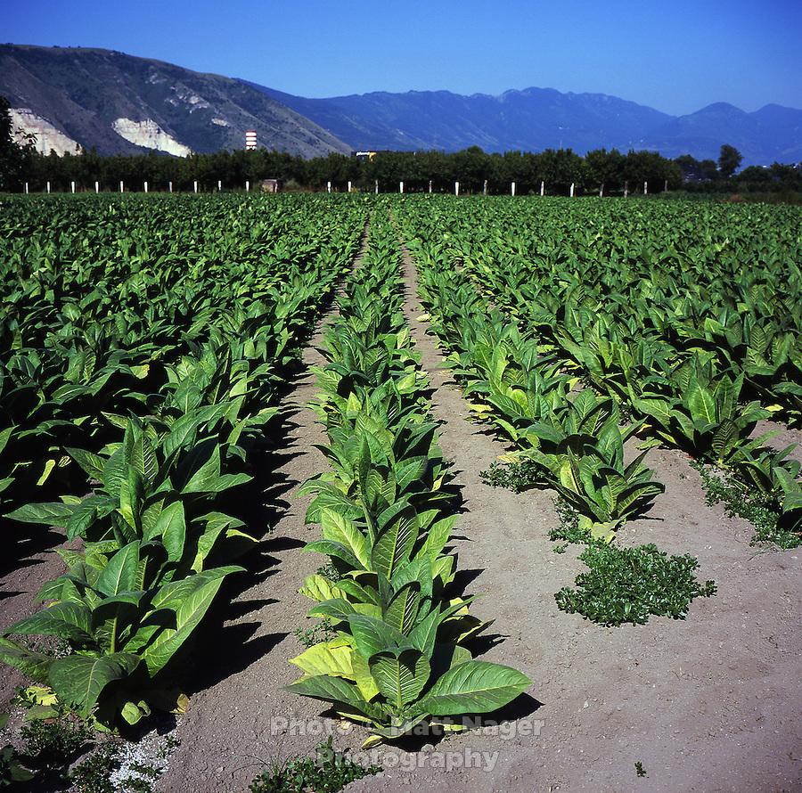fertile soil volcano - photo #39