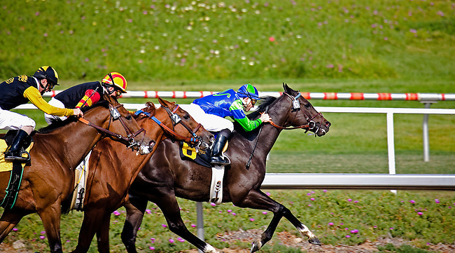 THOROUGHBREDS RACE AT HOLLYWOOD RACE TRACK