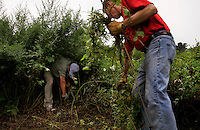 PW Green (Port Washington green) a non-profit corporation focused on the preservation of wild and natural places and using them for environmental education. Neighbors clear weeds from the Guggenheim School Preserve of ragweed and other invasives and are trying to organize a coordinated effort with the school to keep native plants thriving in the meadow.