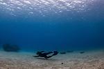 Snorkeler free diving, Vava'u, Tonga