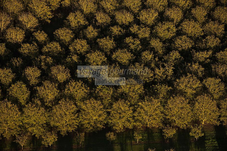 Europe/France/Aquitaine/24/Dordogne/Vallée de la Dordogne/Périgord/Périgord Noir/Castelnaud-La-Chapelle: Noyeraie de la vallée de la dordogne - Vue aérienne