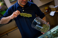 Erik Santus of Denver's Lotus Medical, a downtown-located dispensary, inspects his product in his facility's marijuana dispensary room....Denver-based medical marijuana dispensaries --Colorado is one of 19 states to permit the medicinal use of marijuana.  In the city of Denver, well over 100 marijuana dispensaries have sprung up to meet the demand.  Patients are required to register with the state and have a valid doctor's note for dispensaries to sell them marijuana.