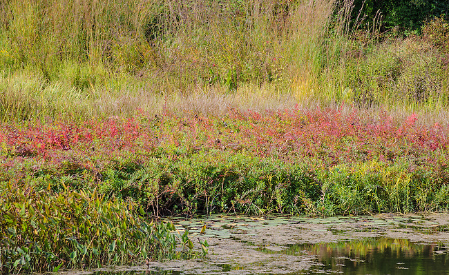 Autumn colors fill the Meadow Lake shoreline in the Dupage County, Illinois