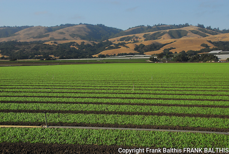 Agriculture in Watsonville